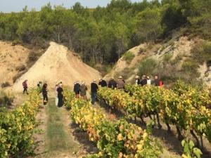 Crowdfunding viticole : les souscripteurs à la découverte de leurs parcelles