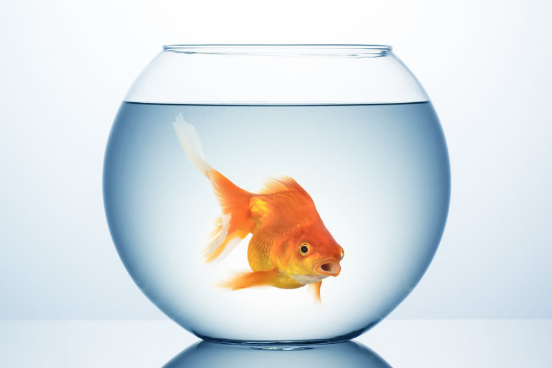 Le retour de l 39 intelligence artificielle ou le syndrome for L alimentation du poisson rouge