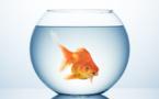 Le retour de l'Intelligence Artificielle, ou le syndrome du poisson rouge ?